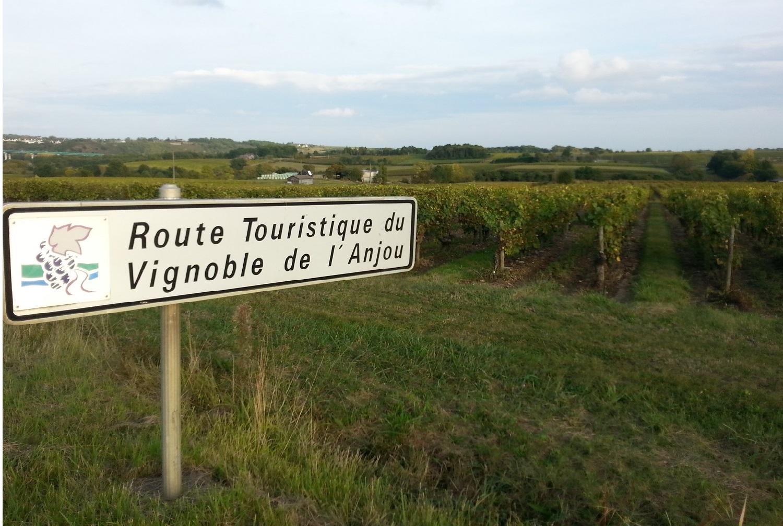LA 2CV ATTITUDE balade 2cv dans les vignes Pays de Loire